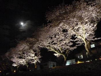 桜と付き350.jpg